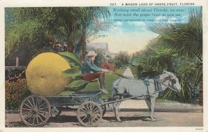 FLORIDA, 1900-1910s; A Wagon Load of Grapefruit, horse-drawn wagon