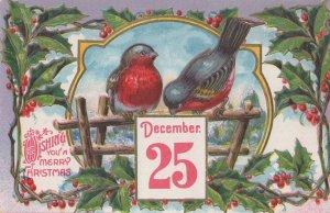 Christmas German Robin Bird Raised Antique Greetings Postcard