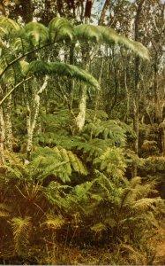 Hawaii Kilauea Island Fern Forest