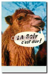 Postcard Modern Camel Pet Humor