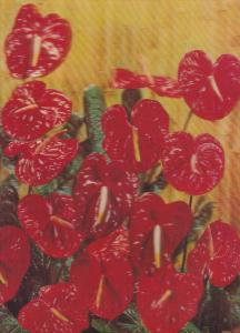 3-D Color, Red Flowers, BURNABY, B.C., Canada, 1970-1980s