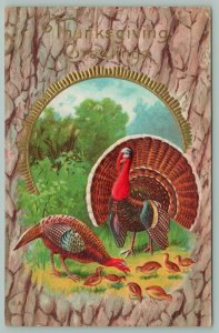 Thanksgiving~Turkey Couple Walk Out Of Gold Circle Portal~Baby Poults~Bark Back