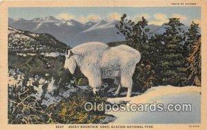 Glacier National Park Real Photo Rocky Mountain Goat Postcard Post Card 1952