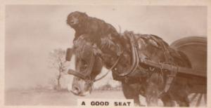 Cowboy Rodeo Monkey On Donkey German Old Real Photo Cigarette Card