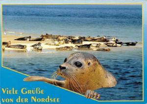 Viele Gruesse von der Nordsee Sea Lion Animals
