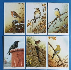 Set of 6 British Wild Birds Postcards by Geoff White Ltd, Robin Thrush Blue Tit