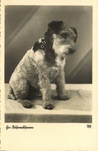 Dog Postcard Terrier (1930s) RPPC (4)