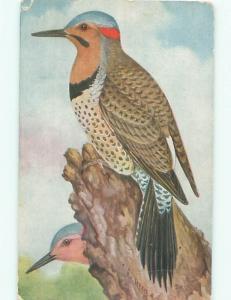 Pre-Linen Close-Up signed FLICKER BIRD AC5684