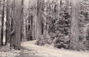 California Stevene Grove On Redwoods Highway Real Photo
