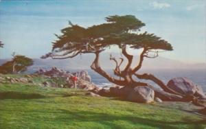 California Carmel Cypress Tree and Sea Along 17 Mile Drive 1960