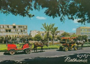 NATHANYA , Israel , 50-70s ; Coaches at Independence Square