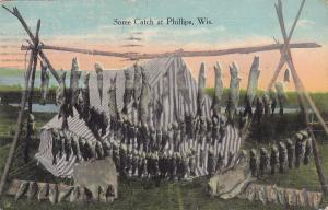 Some Catch at PHILLIPS , Wisconsin, PU-1924; Strings of fish
