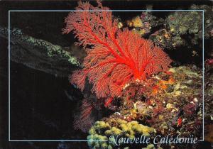 New Caledonia Nouvelle Caledonie Ocean Plant