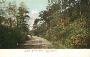 Danbury CT~Man Walks Dog Down Sugar Hollow Road Thru Woods~1905 Postcard