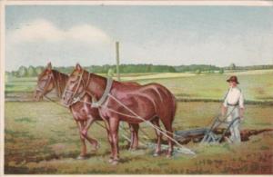 Horses Plowing Field Vanakula