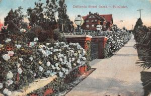USA California Street Scene in Midwinter 1909