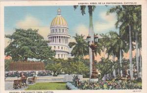 Cuba Havana Fraternity Tree and Capitol Curteich