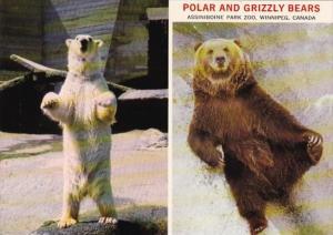 Canada Winnipeg Polar and Grizzly Bears Assiniboine Zoo