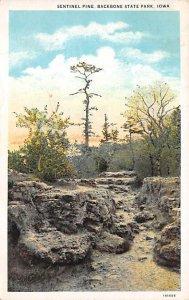 Sentinel Pine Backbone State Park Sentinel Pine, Iowa
