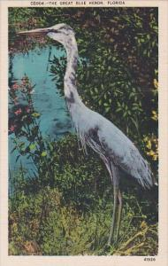 The Great Blue Heron In Florida