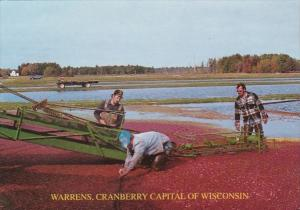 Wisconsin Warrens Cranberry Capitol Of Wisconsin Harvest Time Rezin Marsh 2000