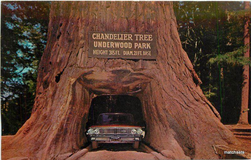 Chandlier Drive Through Tree Redwood Highway postcard 11905