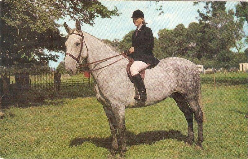 Lady on her horse Nice vintage English postcard