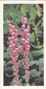 Brooke Bond Vintage Trade Card Woodland Wildlife 1980 No 33 Foxglove