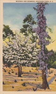 Wisteria and Dogwood,  Southern Pines,  North Carolina,    30-40s