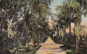 Florida Palm Beach Ocean avenue A Walk Among The Coco And Palmetto Palms