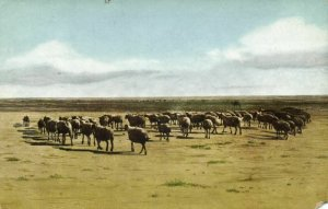 mongolia china, Sheep Flock in the Steppe (1946) Postcard