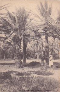 Man & A Camel, Un Coin Dans l'Oasis De Gabes, Tunisia, Africa, 1900-1910s