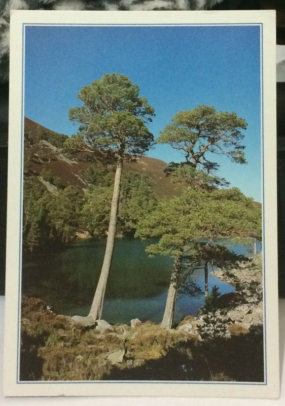 Scotland Ryvoan Reserve Badenoch and Strathspey - posted 1996