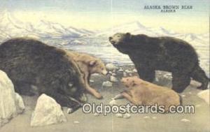 Alaska Brown Bear Postcard Bear Post Card Old Vintage Antique  Alaska Brown