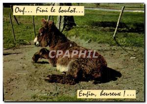 Modern Postcard Donkey Mule