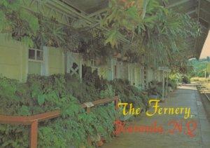 The Fernery , KURANDA . Queensland , Australia , 1970-90s