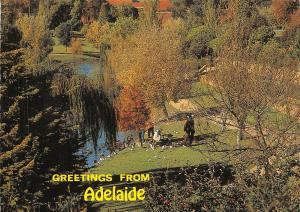 Australia Feeding Adelaide Birds on the banks of the River Torrens near the Zoo