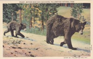 Mother bear and cub hiking, Yellowstone National Park,Wyoming, 1930-1940s