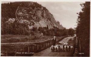 RP;  Sheep , Pass of BALLATOR , Aberdeen , SCOTLAND , 1910s