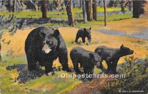 Bear Postcard Mother and three cubs Postal Used Unknown