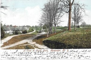 A View in South Park Rochester New York Undivided Back 1905