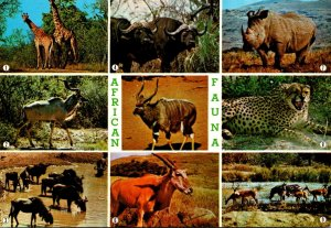 South Africa African Wildlife Griaffes Rhinocerus Eland Cheetah and More