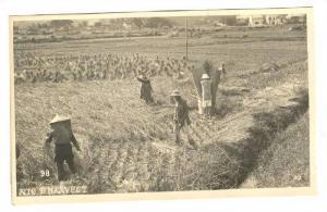 RP; Farmers in field, Rice Harvest, JAPAN, 1910-20s
