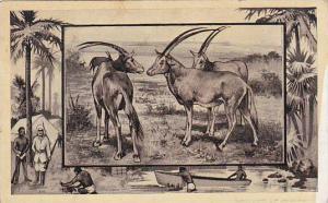 M J Mintz Animal Series The Antelope