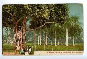127435 Egypt CAIRO Groupe de Palmiers jardin Esbekieh Garden