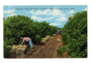 Farming Grapefruit to Market Rio Grande Valley TX Postcard Picker Truck #83065