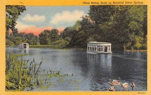 Glass Bottom Boats on Beautiful Silver Springs Florida