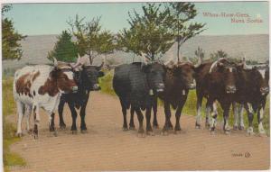 Whoa-Haw-Gees (Oxen Teams), Nova Scotia, Canada, 00-10s