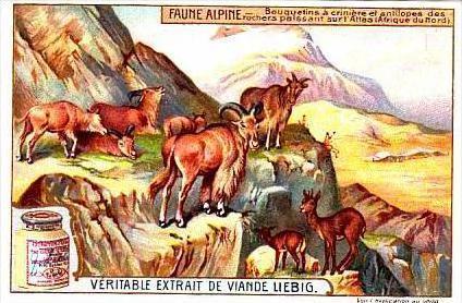 Liebig S958 Mountain Animals No 6 African Antelope