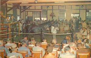 Lexington Kentucky~Yearling Horse Sales~Keeneland Race Course~1950s Postcard